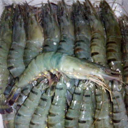 Shrimp & Prawn